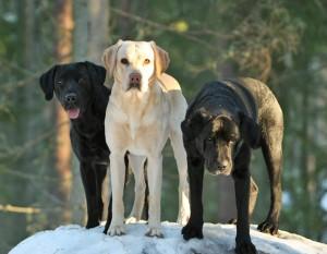 """3 fina grabbar på """"sin egna"""" sten"""